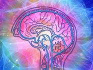 Mind Moves Online